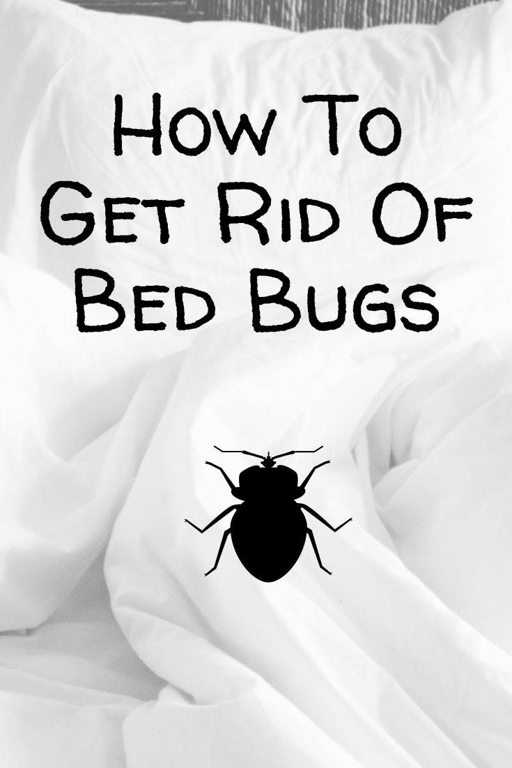 How To Get Rid Of Bed Bugs Domestications Bedding