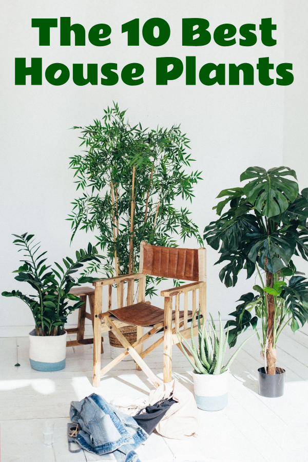 The 10 Best House Plants