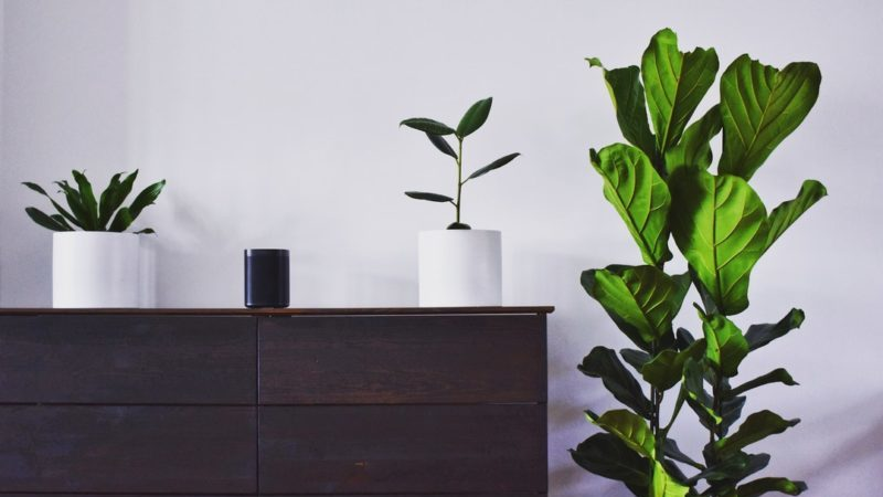 House Plants to Brighten Your House