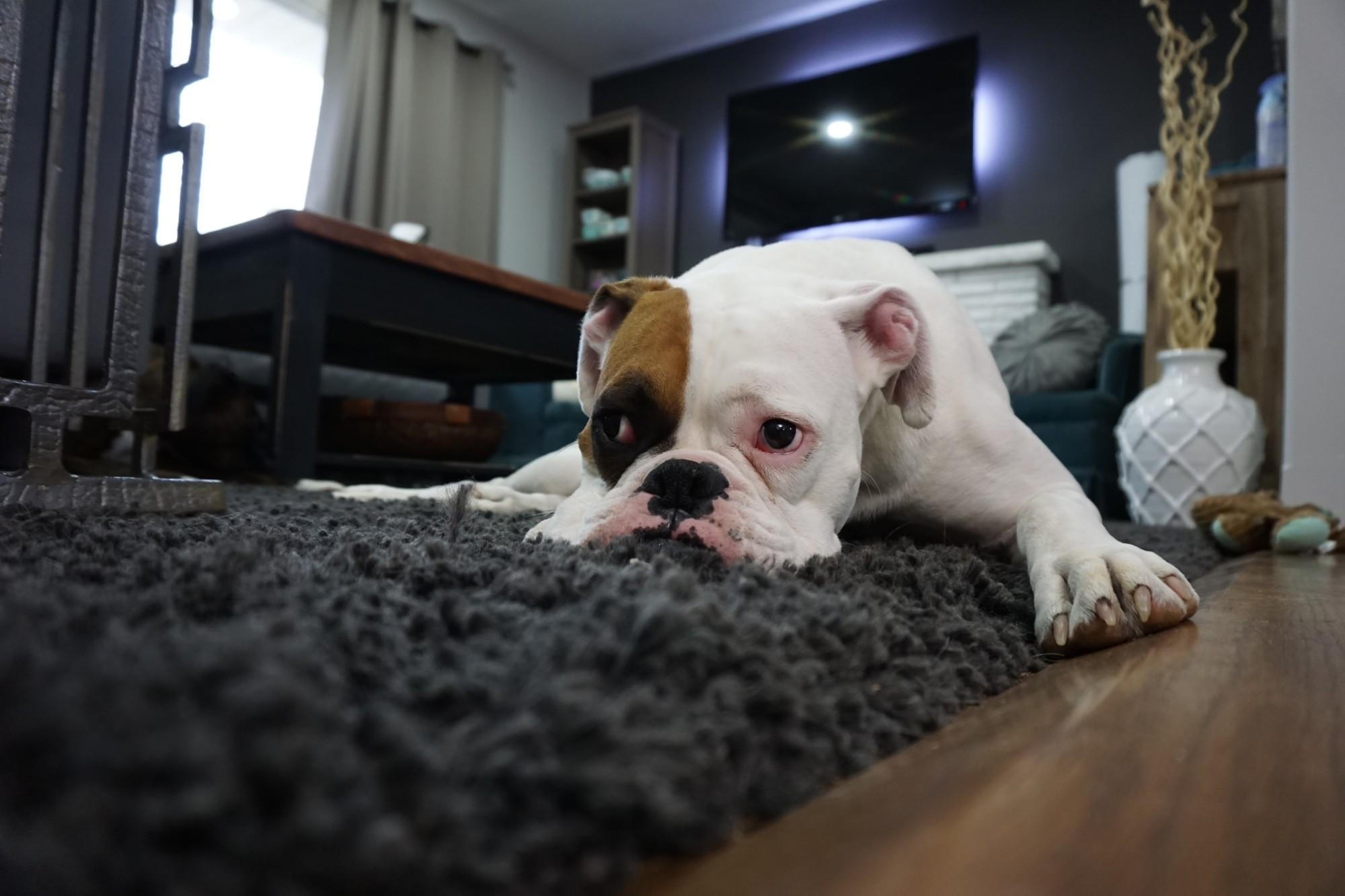 How to Keep Carpet Clean Even with Kids and Pets in Your Home