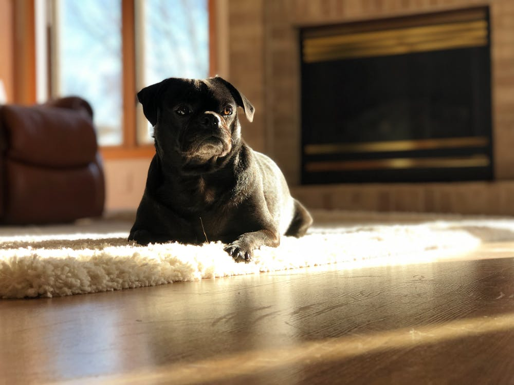Create a More Pet-Owner Friendly Home