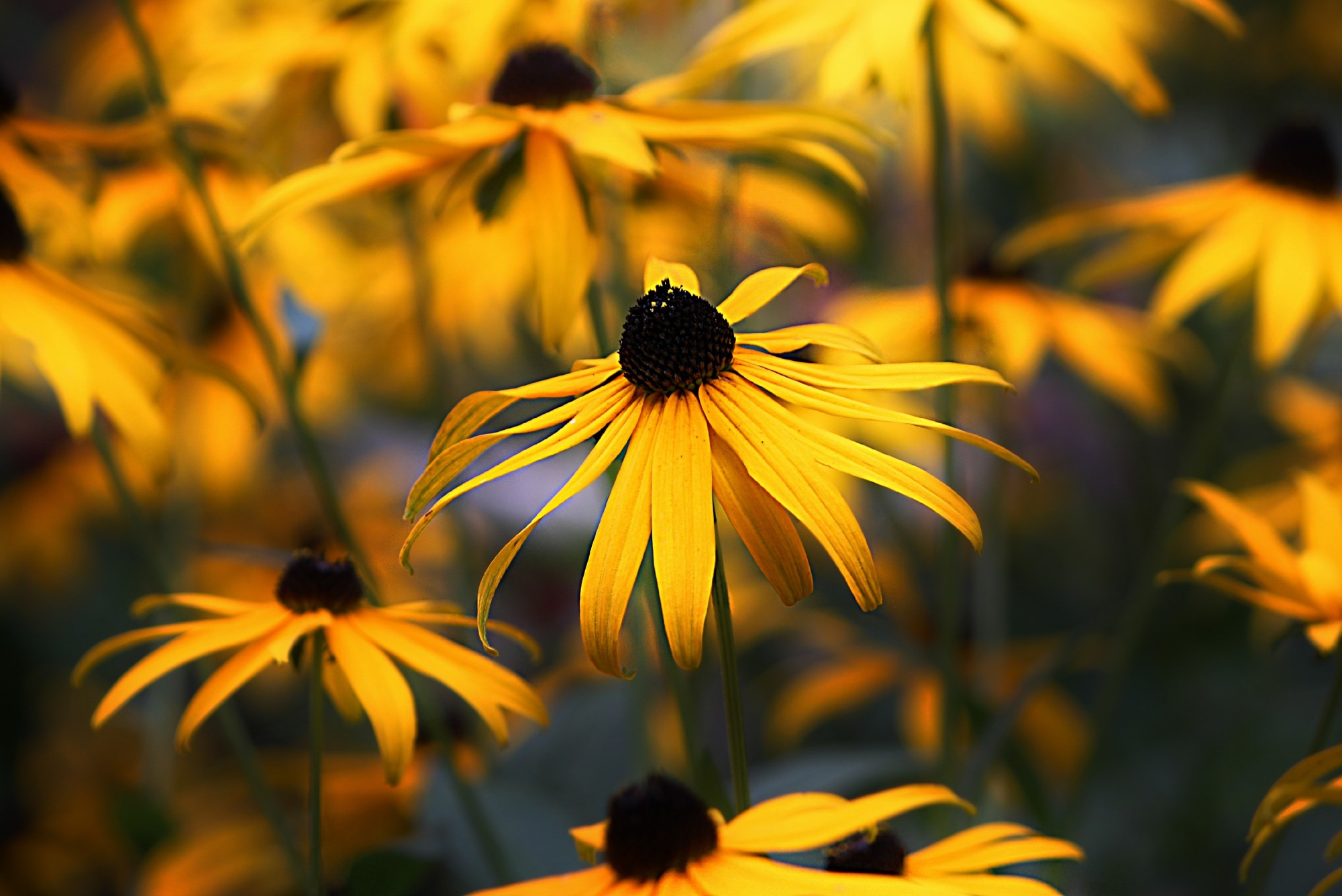 Go Native and Water-Wise: 5 Texas Native Plants to Add to Your Garden