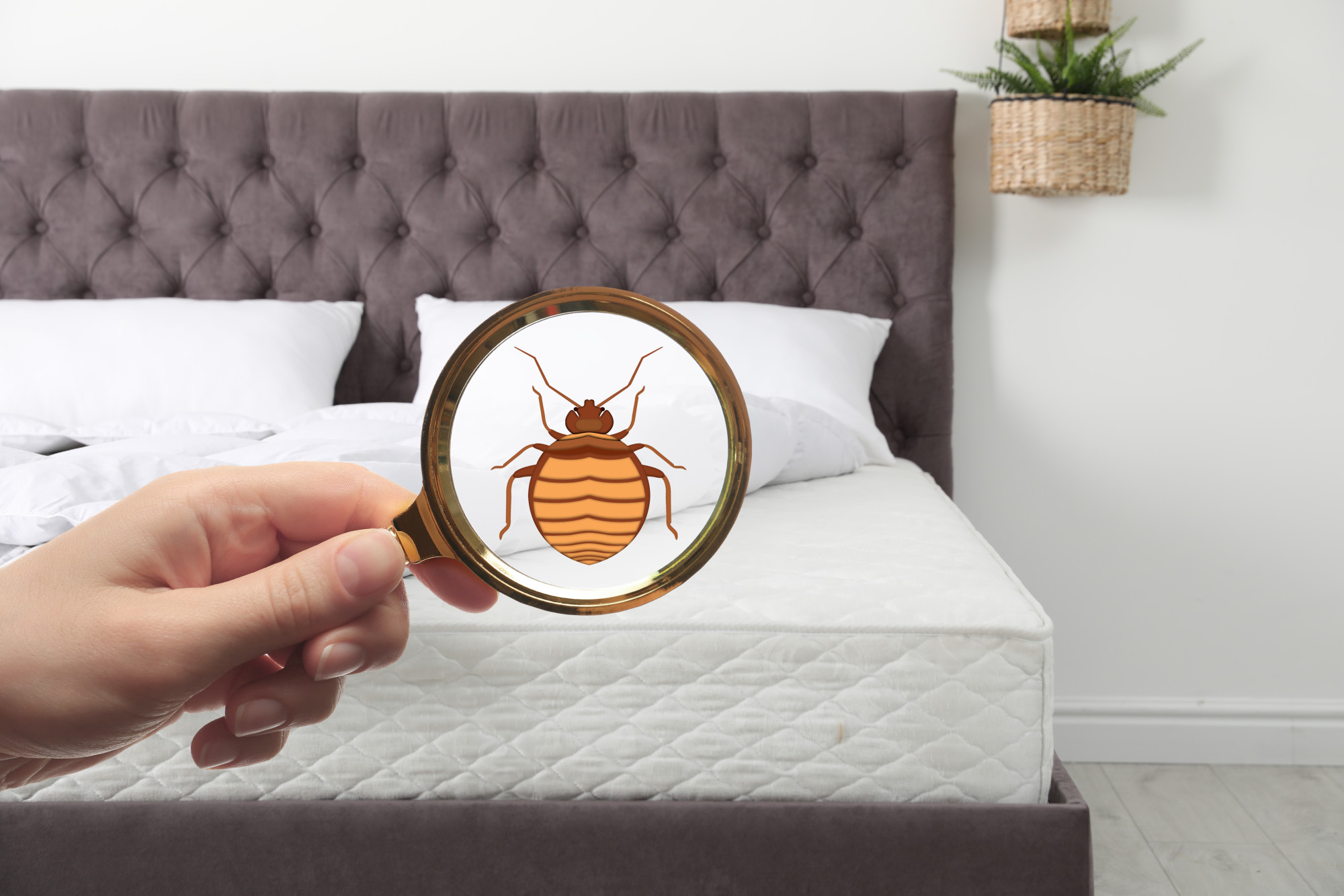 How to Prevent Bed Bugs from Invading Your Home
