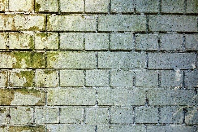 Heavy mold on a brick wall.