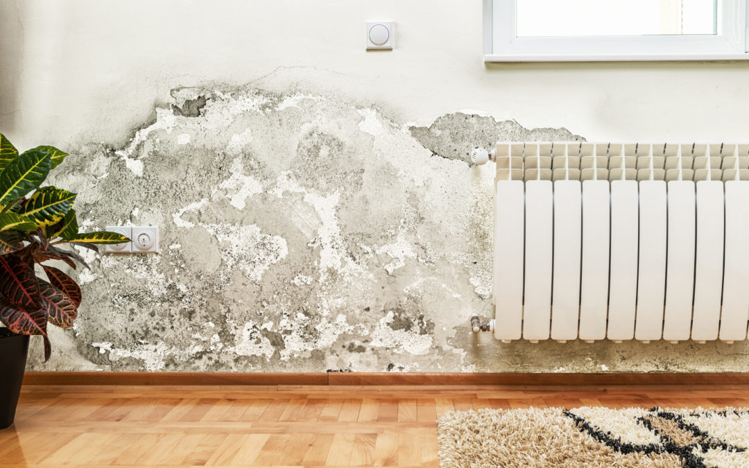 Signs You Need To Look Out For When There Is Mold Infestation In Your Bedroom