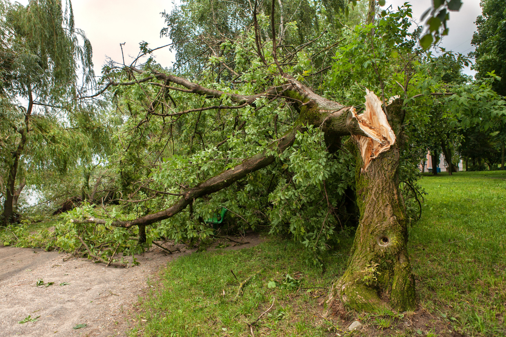 How Much Does It Cost to Have a Tree Removed?
