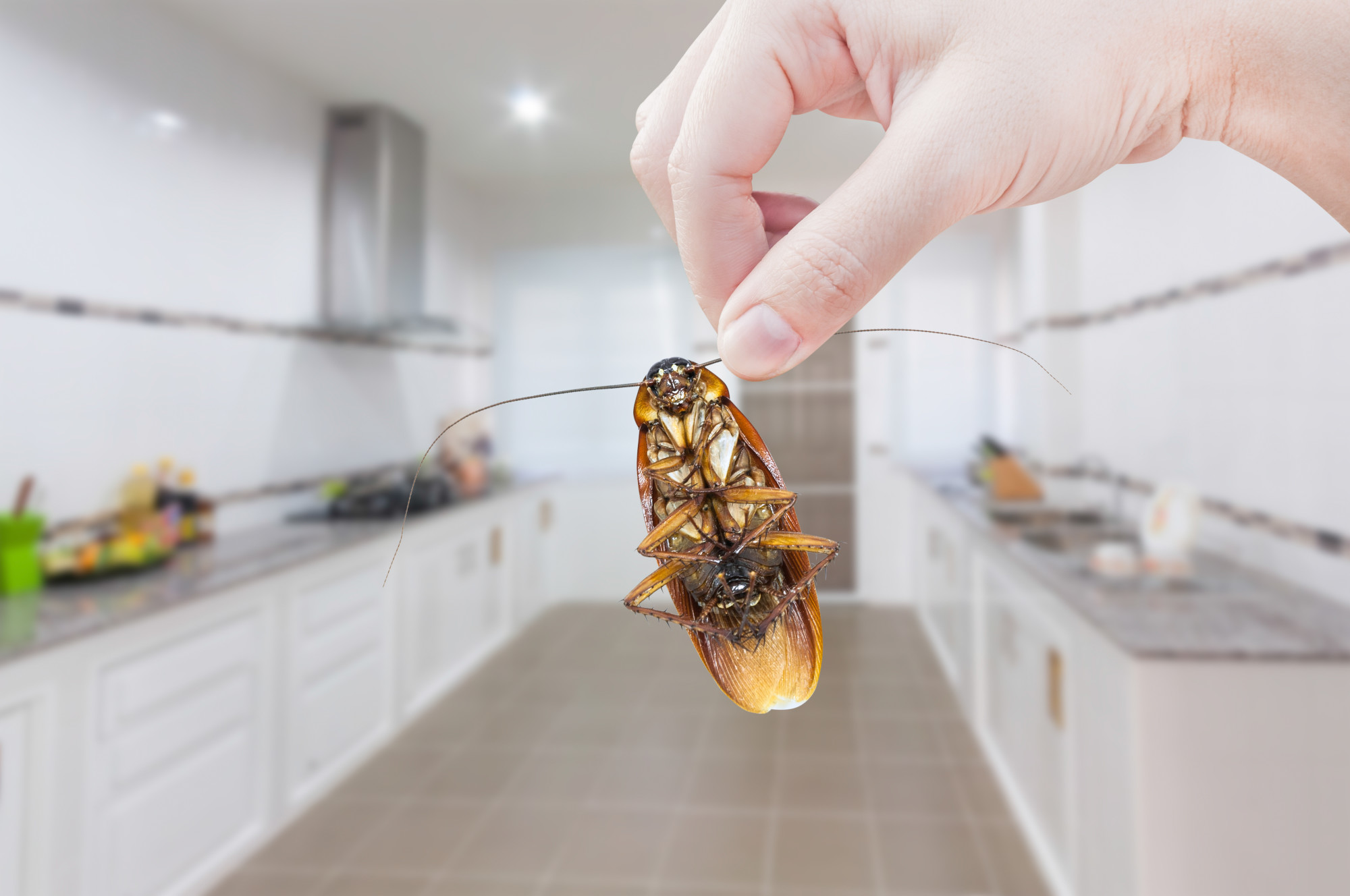Eaten Alive: Notorious House Pests That Will Destroy Your Home