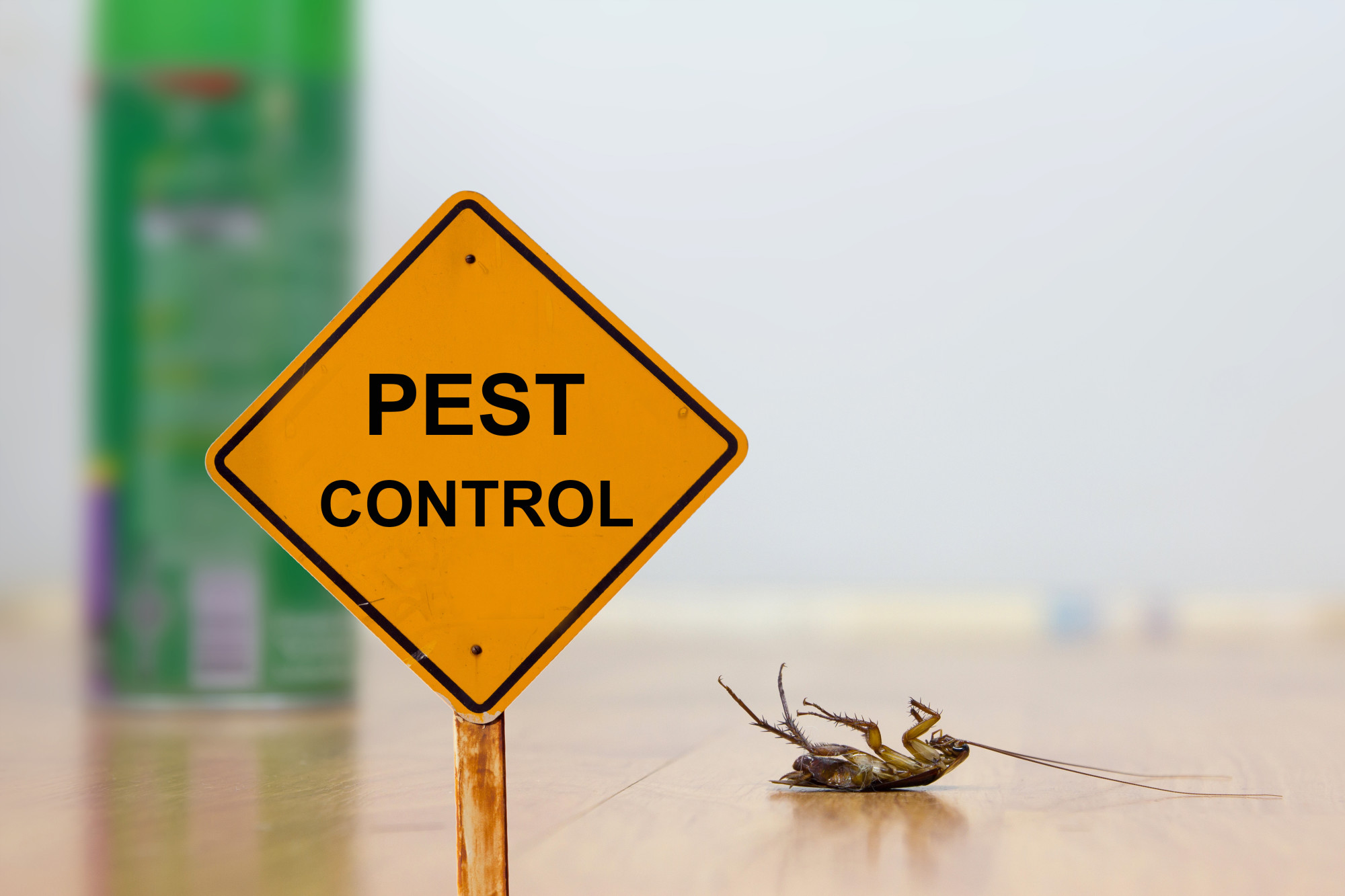 Dealing With House Pests in 3 Effective Ways