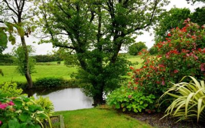 Essential Tools You Will Need for Landscaping