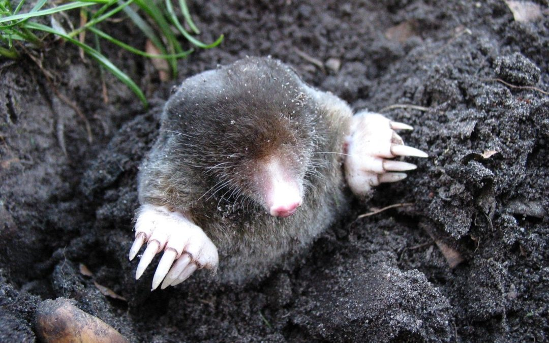Trap a Mole
