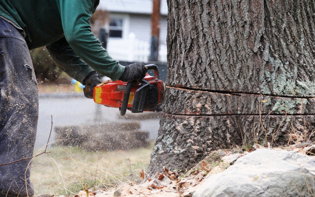 How to Hire a Tree Removal Service: A Homeowner's Guide