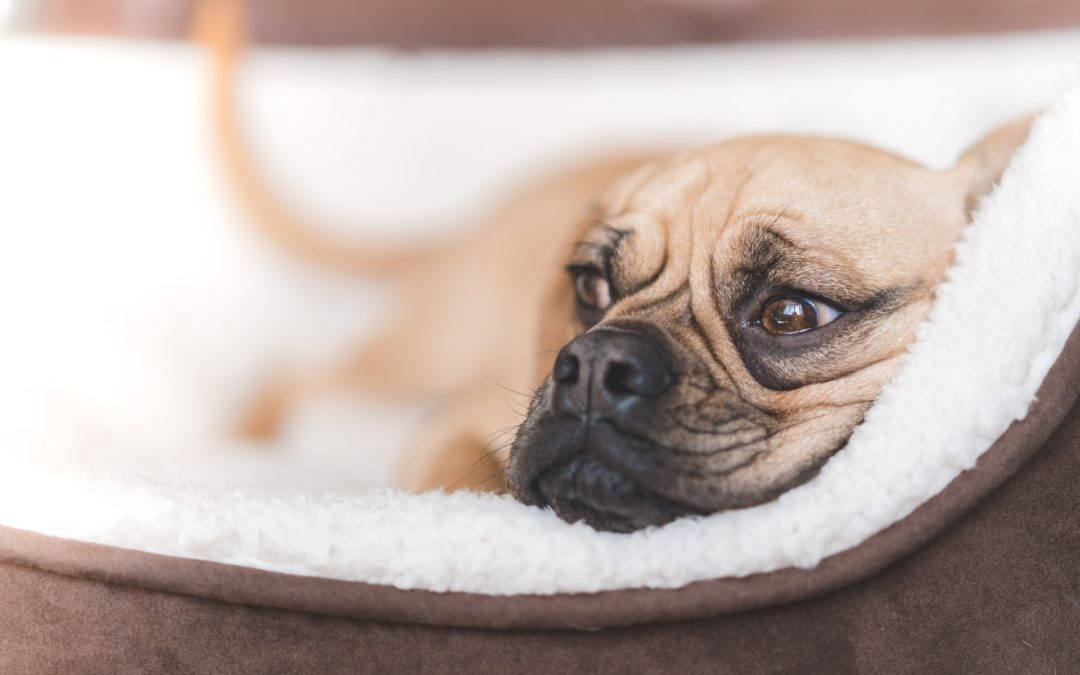 Which Dog Bed Is Right for Your Dog?
