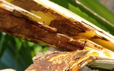 Top 5 Natural Methods To Eliminate Termites
