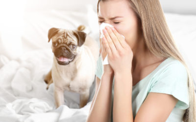 How to Reduce Indoor Allergens in Your Home