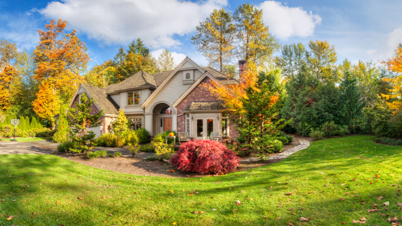 4 Ways a Tree Benefits You and Your Home