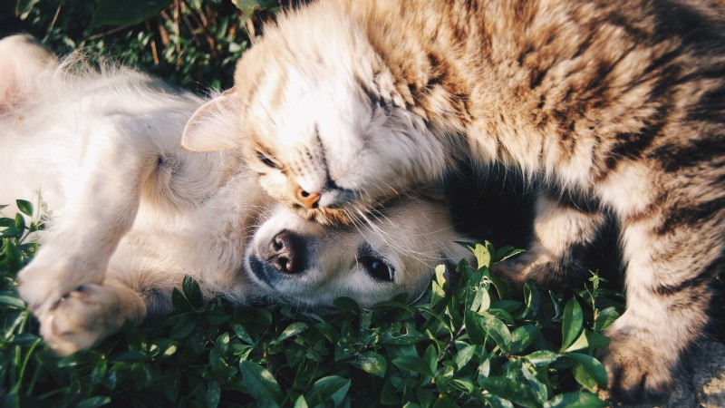 How to Take Care of Pets at Home?