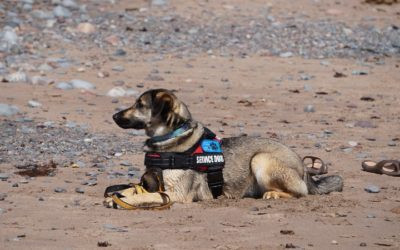 How to Travel With Service Dog